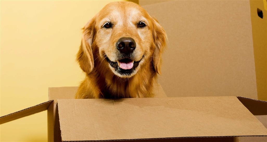 dog in box smiling